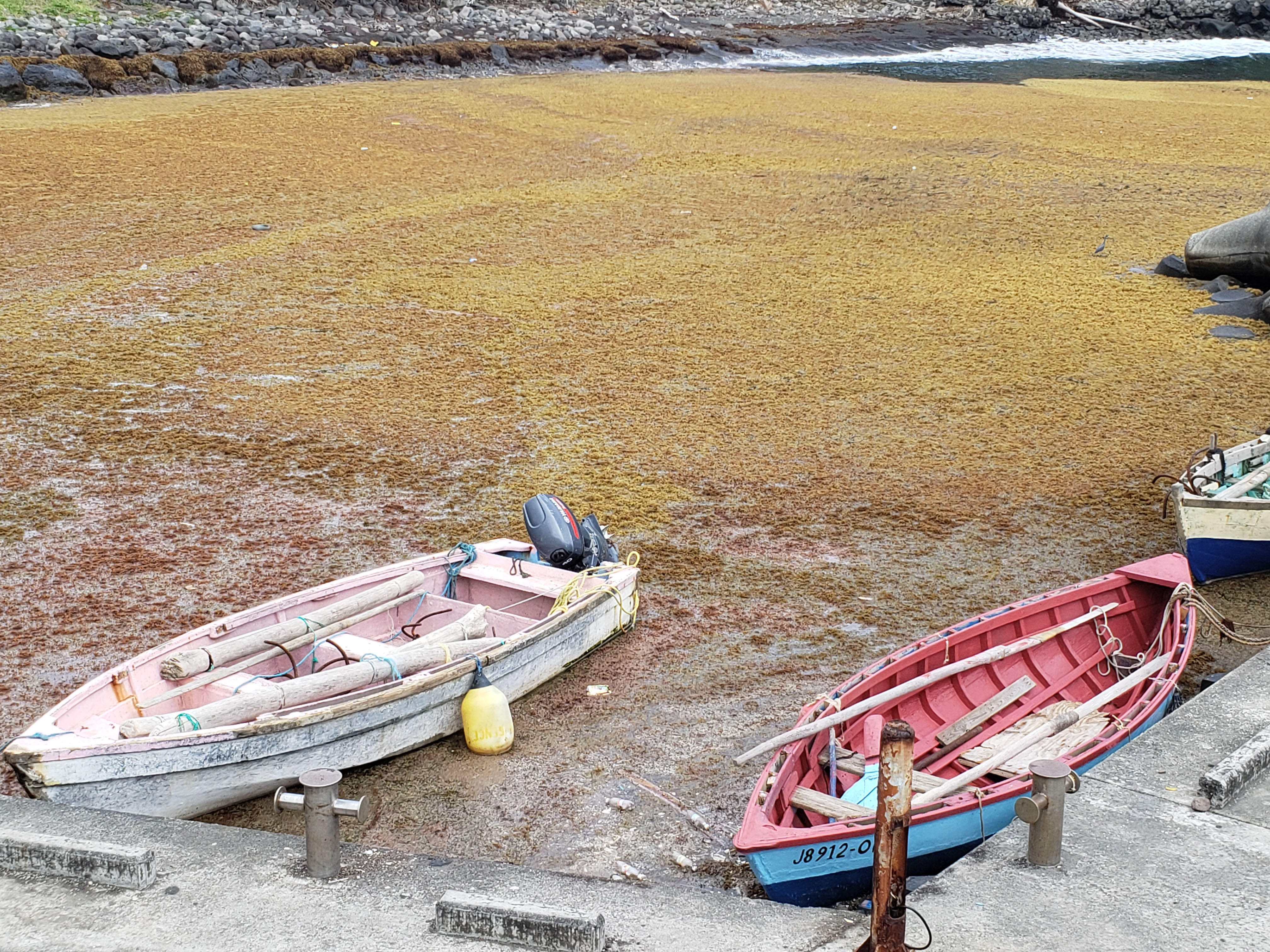 Sargassum inundation -- seen here in Saint Vincent and the Grenadines -- continues to affect countries across the Caribbean